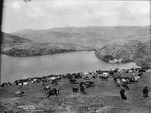 Harnett's Lake, Kosciusko