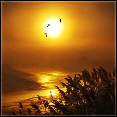 Natures Golden Moments