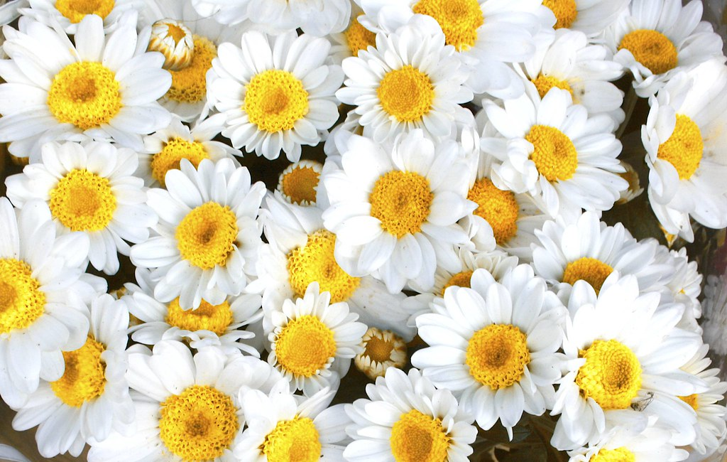 White and yellow flowers name best image of flower mojoimage flowers names in english black and white mightylinksfo