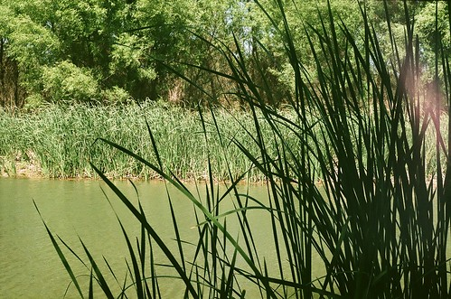 verde and reeds