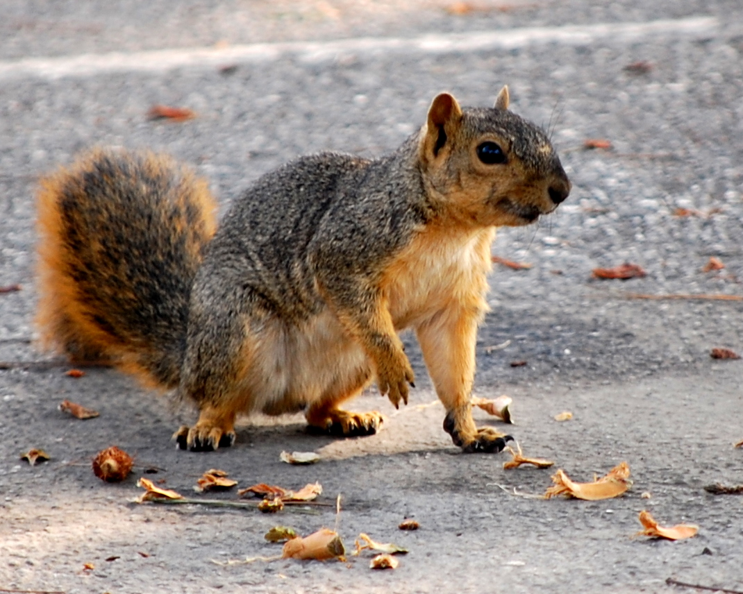 Another of that Rabid Squirrel   Flickr - Photo Sharing!