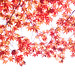 Red Canopy by yoshiko314