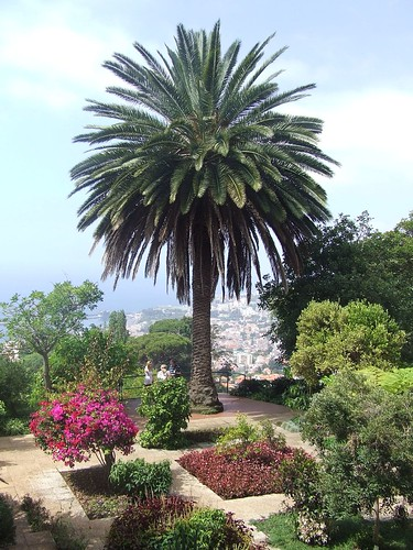 Madeira - Funchal - Monte