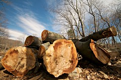 A Woodcutter's Life