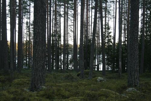 nature finland forrest kälviä klapurinjärvi