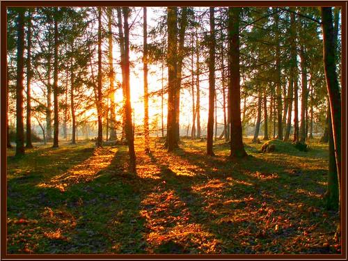 sunset landscape evening õhtu loojang maastik päikeseloojang golddragon abigfave welcometoestonia aplusphoto olympusstylus600 photofaceoffwinner janne4janne goldstaraward