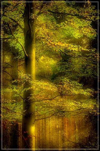 Chopwell - A favorite tree 3