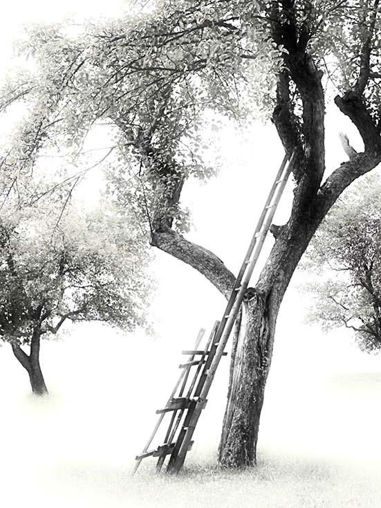 Photography - Step Upward by Nicholas M Vivian