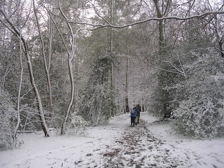 Into the white wood