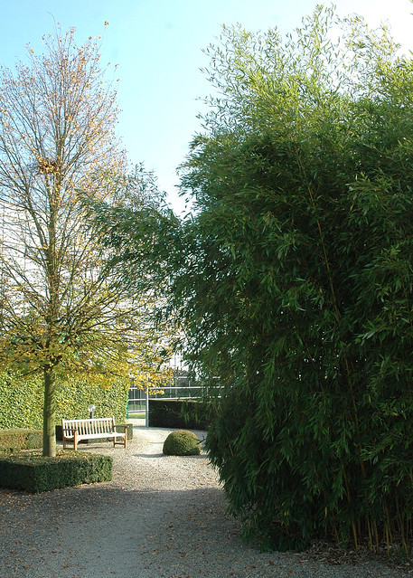 Bamboo entrance : Phyllostachys aureosulcata 'Aureocaulis'