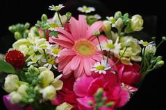 花束 / Bouquet