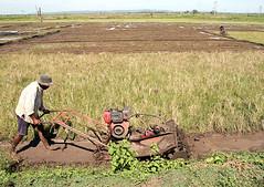 prairie, agriculture, farm, field, soil, vehicle, plough, plain, farmworker, paddy field, crop, rural area,