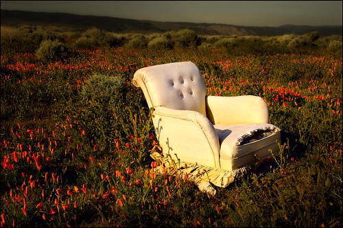 chair in the poppies