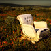chair in the poppies by jody9