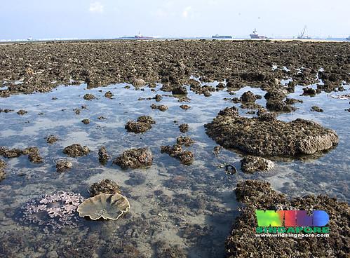 Living reefs of Terumbu Bemban