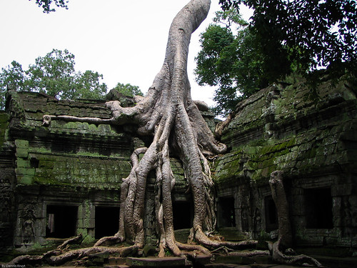 Angkor wat tree by Dennis Kruyt
