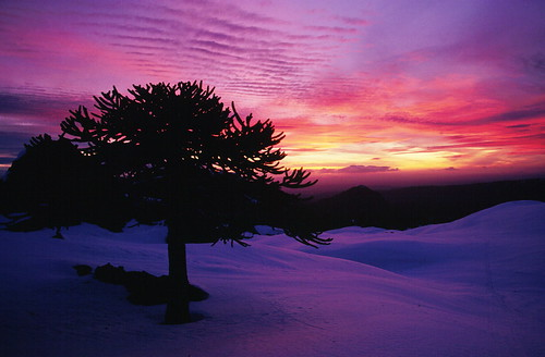 chile sunset sky mountain tree clouds sunrise trekking landscape volcano backpacking bosque árbol andes invierno araucaria montaña cordillera esquí volcán mikeoldfield chilecentral cordilleradelosandes regióndelaaraucanía volcánllaima turichile