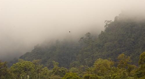 2005 cloud mist mountain bird nature animal fog forest landscape ecuador vulture cloudforest fc 15c mindo flickrchallengegroup
