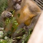 San Diego Zoo 009