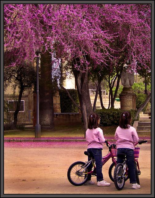 Composición de Colores Homónimos (Parque de Mª Luisa)