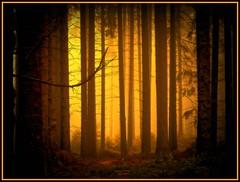 Nebelwald - trees in yellow fog