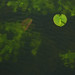 Small photo of LEAF AFLOAT
