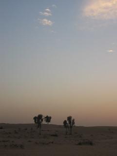 Desert scrub at dusk.