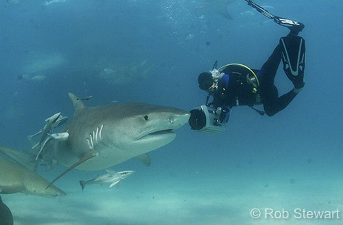 Eric Cheng with tiger shark