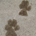 Small photo of Paw prints