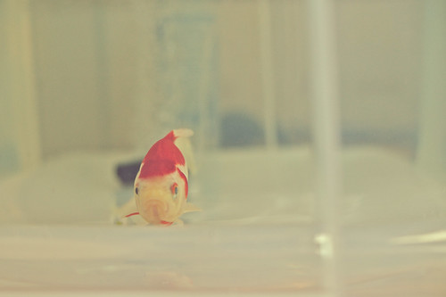 Grumpy fish.