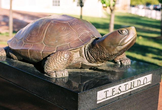 R Turtles Lucky Testudo_2 | Flickr - P...