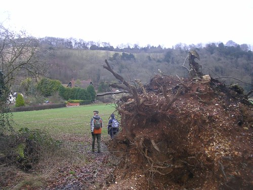 Past a fallen tree