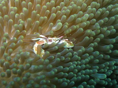 anemone fish(0.0), fish(0.0), macro photography(0.0), pomacentridae(0.0), coral reef(1.0), animal(1.0), coral(1.0), yellow(1.0), organism(1.0), marine biology(1.0), stony coral(1.0), green(1.0), close-up(1.0), underwater(1.0), reef(1.0), sea anemone(1.0),