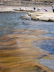 Kimmeridge Bay - Seaweed