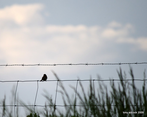 sunset sky bird clouds fence wire barbedwire wirefence