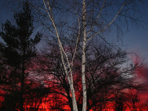 trees sunset pines birch naturesfinest