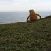 Small photo of Flat Eric Does Brazil