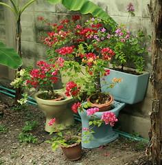 toilet planters