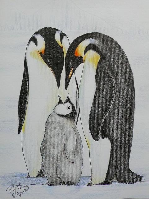 Penguins drawing - photo#55