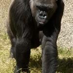 Los Angeles Zoo 089