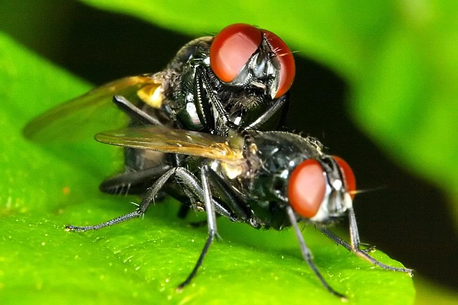Making little flies / Fazendo mosquinhas