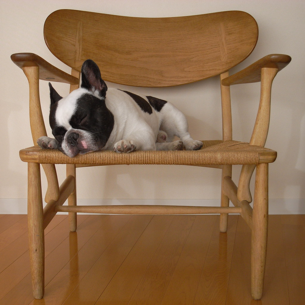 French Bulldog sleeping on Wegner easy chair