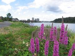 willamette greenway flowers