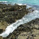 Laguna Beach Trip 27