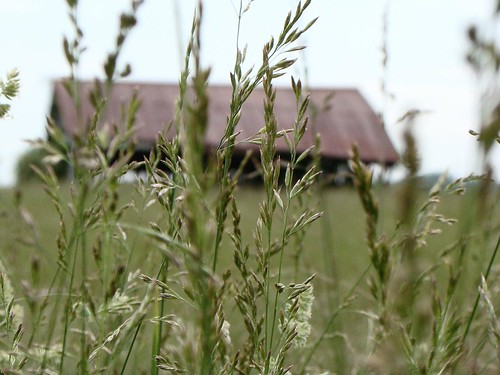 roof red nature field barn hay anawesomeshot