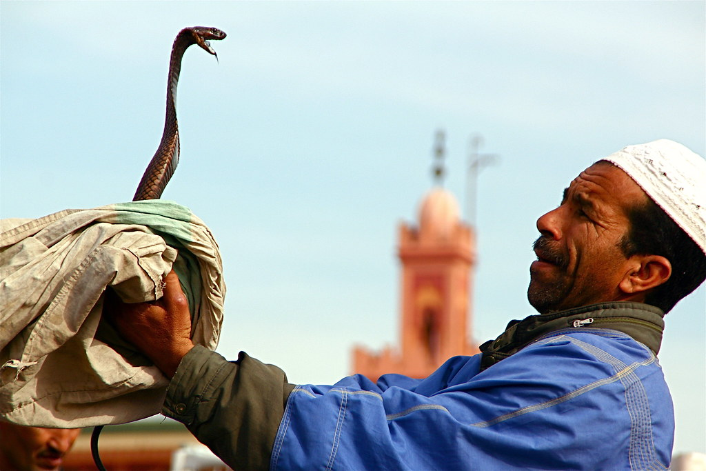 Marrakech Snake Charmer in Jemaa el Fna
