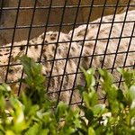 San Diego Zoo 047