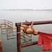 Monkey - Varanasi, India by Maciej Dakowicz
