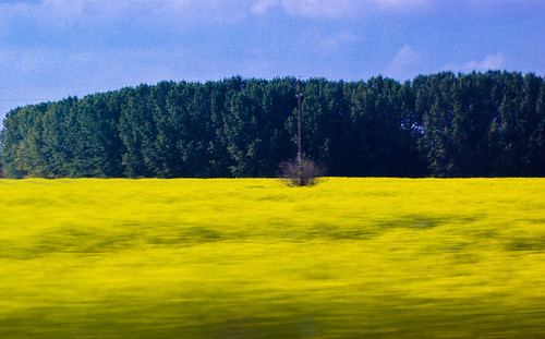 nature colors field europe hungary pentax rape canola indig naturesfinest pentaxk10d lasloindig