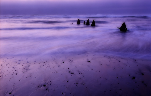 Dusk at the Neskowin Ghost Forest